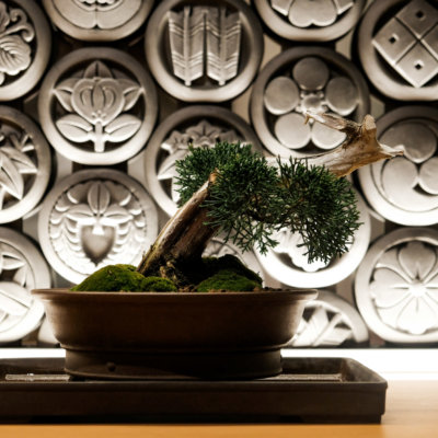 Bonsai - as Japanese as it gets.